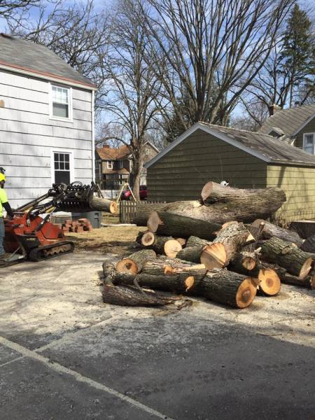 Lot Clearing, Cut Down Trees, Remove Stumps,